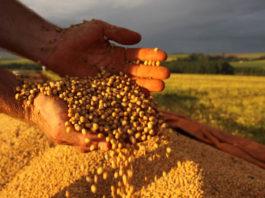 Clima compromete produçãpo de soja dos EUA e faz com que soja brasileira tenha alta no mercado internacional, mês de junho já supera 2018 com 20 dias.
