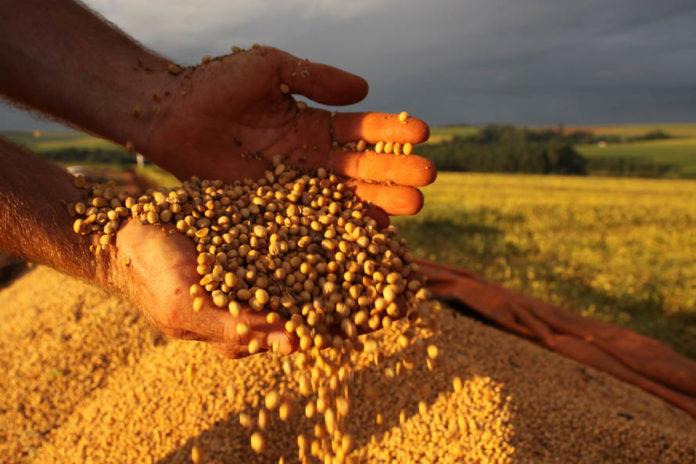 A produção agrícola brasileira deve bater novo recorde em 2020. Isso de acordo com as estimativasda safra, divulgado nesta terça-feira (10) pelo Instituto Brasileiro