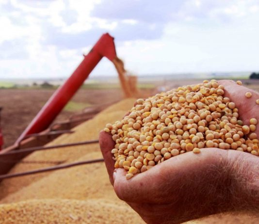 De acordo com a consultoria Cogo – Inteligência em Agronegócio, o Brasil deve registrar em março recorde de exportações de soja para o mês.