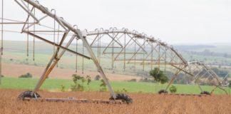 Safras de soja e milho têm projeções elevadas pra 2018/19