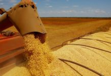 A indústria e produtores de soja do Brasil estão enfrentando uma alta no frete rodoviário. Isso acontece em função da pandemia de coronavírus que colocou