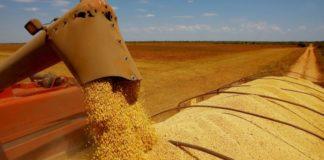 O Brasil segue quebrando todos os recordes quando o assunto é exportação de soja. De janeiro a maio deste ano o país já embarcou 49,725 milhões de toneladas