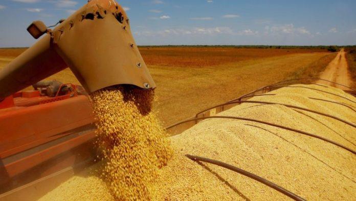 OIBGEdivulgou nesta quarta-feira aumentou nesta quinta-feira (11) em 4,2% a projeção para a produção agrícola em 2019