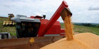 As ameaças tarifárias de Donald Trump contra o México, pode beneficiar a venda de milho ao Brasil. O México busca alternativas para suprimento do cereal.