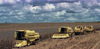 De acordo com estimativa do IBGE, a safra de grãos 2020 deve alcançar mais um recorde. Segundo o Instituto, são previstas de 249 milhões de toneladas