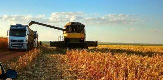 Preço da saca do milho no Mato grosso do sul cai