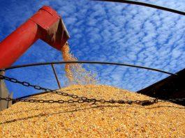 A Companhia Nacional de Abastecimento (Conab) anunciou nesta terça-feira, 3, em nota, que vai realizar leilão de frete para remover cerca de 13 mil toneladas de milho