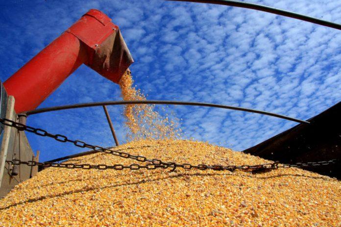 As exportações de milho pelo Porto de Paranaguá, entre janeiro e maio de 2019, já superam o volume registrado em todo o ano de 2018.