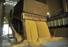 Mesmo com a estiagem histórica que atinge o Paraná desde o ano passado, a produção de soja no estado atingiu 20,7 milhões de toneladas em 2020.