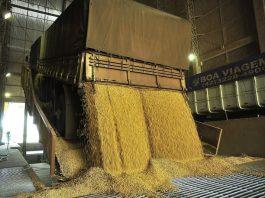 Apenas dois dos 14 trechos pesquisados pela consultoria Safras & Mercado registraram desvalorização na cobrança da tonelada de soja e milho