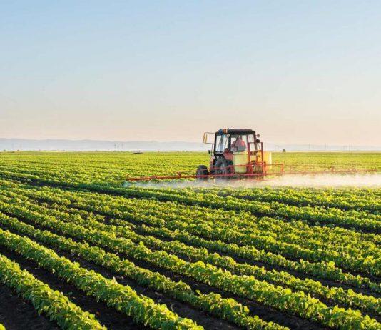 De acordo com levantamento do IBGE, a produção de alimentos no Brasil deverá atingir 239,7 milhões de toneladas em 2019.
