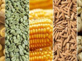 Exportações do agronegócio batem recorde em faturamento no mês de maio e rendeu US$ 13,94 bilhões ao país. Esse valor compreende alta de 33,7%.