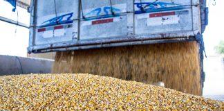 A Companhia Nacional de Abastecimento (Conab) realiza na sexta-feira, 17, leilão para contratação de frete a fim de remover 35,8 mil toneladas de milho