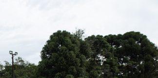 A BRLOG, empresa especialista no transporte de cimento a granel, com sede em Curitiba, adquiriu 12 modelos Hi-Way 440 6X2, da IVECO.