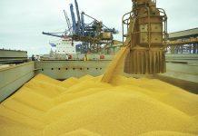 Comvolume recorde de soja exportado pelo Brasil no primeiro semestre, empresas do país começam a ter dificuldades em se abastecer.