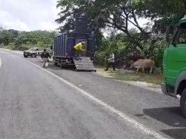 Dessa forma, as ordens de serviços já foram expedidas, autorizando a manutenção e conservação de 4.000 quilômetros de rodovias em todas as regiões do Piauí.