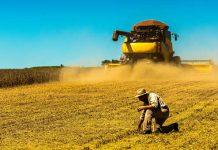 Agricultores enfrentam dificuldades com o transporte de soja após um volume de produção maior que o esperado e falta de caminhões graneleiros.
