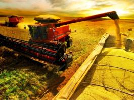 O alto custo dos fretes marítimos e a falta de contêineres, impactam negativamente as exportações brasileiras de arroz. Só em agosto, o preço do transporte